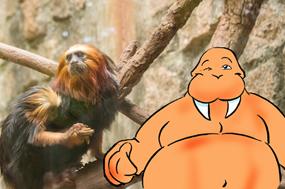 Participe do novo clipe musical do Papo de Gordo (e pague mico na internet)
